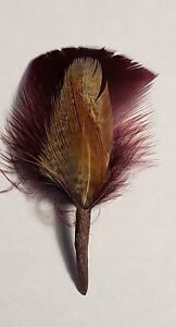 Image is loading Hat-Band-Feather-Hatband-Feathers-Fedora-Tuxedo-Maroon- 959447ba7e70