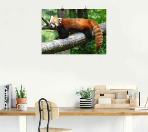 Poster Kunstdruck auf Qualitätspapier Artland Tiere Wildtiere Foto Ocker T1YU