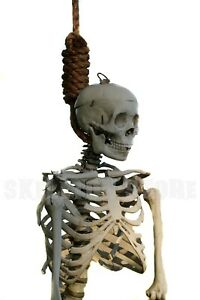 """3/4"""" Halloween Hangman's Noose Prop"""