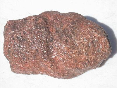 "4.2"" PETRIFIED PINE CONE LARGE RARE FOSSIL SPECIMEN PATAGONIA 1.1 lb"