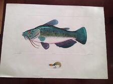 BLACK BULLHEAD CATFISH FISH PAINTING FISHING ART REAL CANVAS PRINT