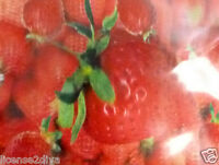 3d Lenticular Strawberry Air Freshener 3 Refills Reuse As Bookmark Or Frame It