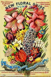 1898-Floral-Guide-Vintage-Flowers-Seed-Packet-Catalogue-Advertisement-Poster