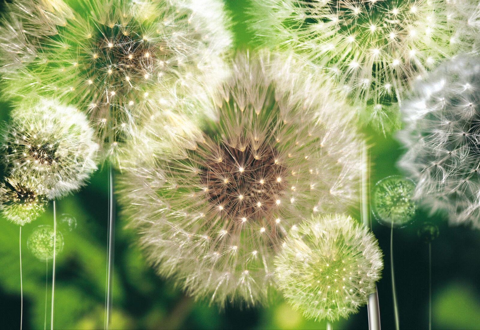 VLIES Fototapete-LÖWENZAHN-(10221)-Puste-Blumen Design Sonne Wald Bäume Grün xxl