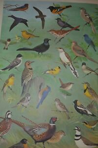 Details about VINTAGE ART PENNSYLVANIA GAME COMMISSION WILDLIFE GAME BIRD  PRINT NED SMITH