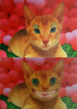 Smiling CAT (funny) - 3D Motion Lenticular Postcard Greeting Card - Humorous