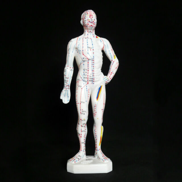26cm Male Acupuncture Model - Anatomical Medical Anatomy - Chinese Medicine