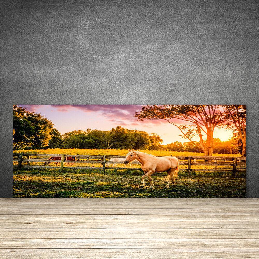 Crédence de cuisine en verre Panneau 125x50 Animaux Cheval Prairie