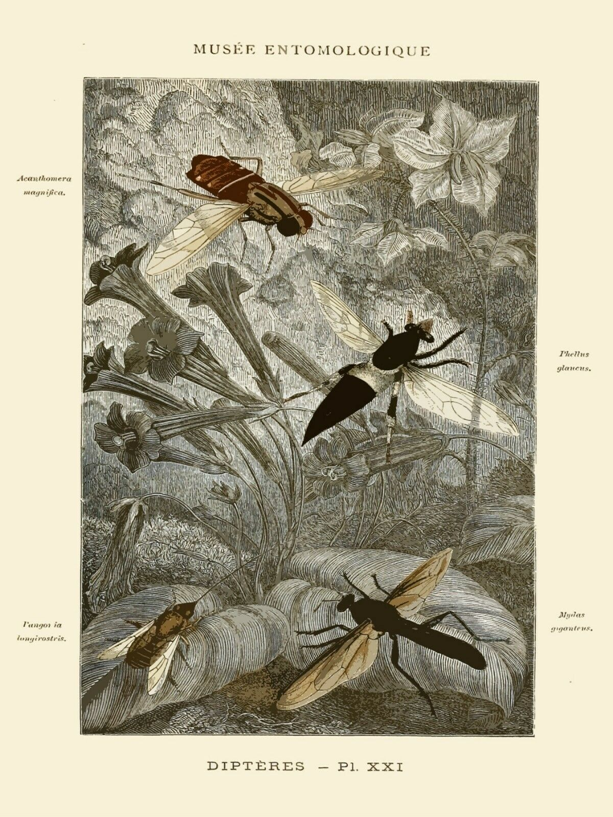 Decoration Poster.Home wall art.Room design.French Insects Science decor.9144