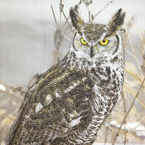 3 x Single Paper Napkins For Decoupage Craft Angry Grey Owl Snow Winter M471