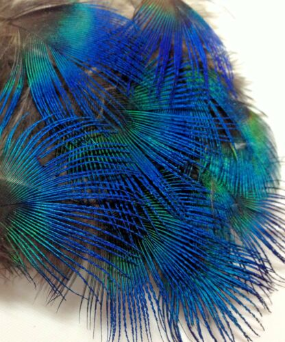 10pcs Natural Blue Peacock Neck Plumage Feathers DIY Craft Millinery Jewellery