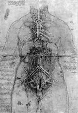 Leonardo Da Vinci Blood Vessels of a Female  Anatomy Poster Print Art