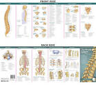 Anatomical Chart Company's Illustrated Pocket Anatomy: The Vertebral Column & Spine Disorders Study Guide by Lippincott Williams and Wilkins (Fold-out book or chart, 2007)