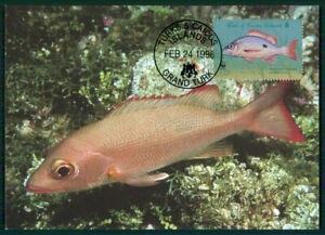 Amical Turks & Caicos Mk 1998 Faune Poisson Tropical Fish Pesce Brais Maximum Carte En41-afficher Le Titre D'origine Garantie 100%