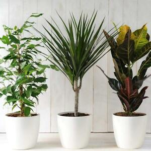 eBay & Details about House Plant Indoor Garden Mix Scandi Collection Lucky Dip 3 x 12cm Pot Plant T\u0026M