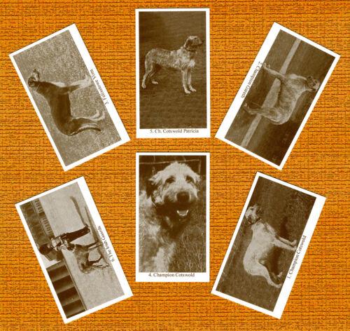 Irish Wolfhound Named Set Of 6 Dog Photo Trade Cards
