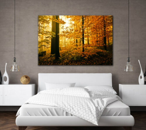 LARGE CANVAS WALL ART AUTUMN FOREST TREES YELLOW LEAVES PICTURE STUNNING PRINT