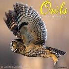 Owls 2017 Wall Calendar by Willow Creek Press