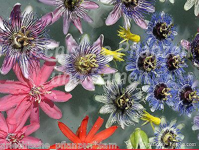Passiflora Mix * 12 Sorten * 69 Samen * Maracuja * tolles Geschenk Passionsblume