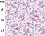 ROSE /& HUBBLE 100/% COTTON FABRIC SPACE CONSTELLATIONS ROCKETS SHOOTING STARS SEW