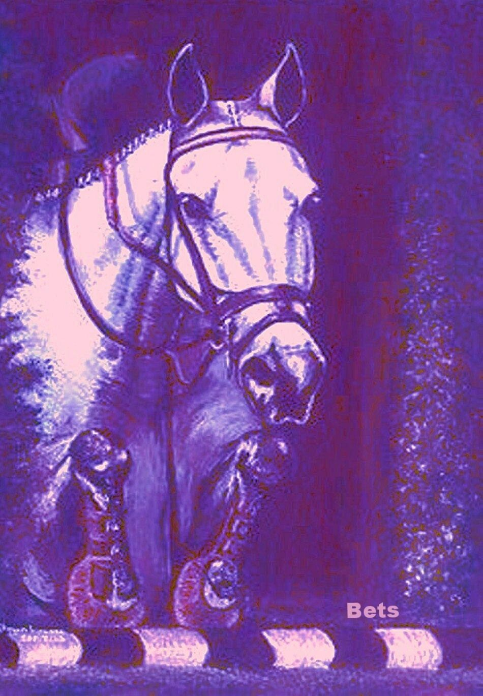HORSE PRINT Giclee JUMPER  Art NO FAULTS artist BETS  6 COLORS print size 14 X 19  discounts and more