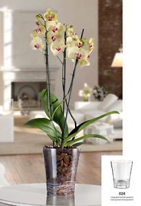 Vaso portavaso orchidea trasparente per orchidee 14 cm - Vaso in gres per orchidee ...