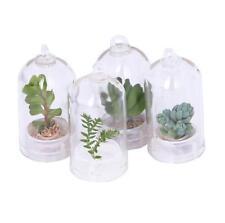 1 PC Fashion Cactus Miniature Succulent Cacti Wearable Necklace Live Plant New