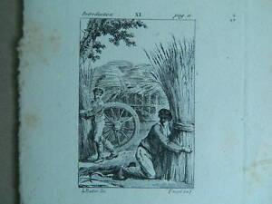XIX Antica Incisione Taglia Dolce il Barbiere Inciso Da Pauquet