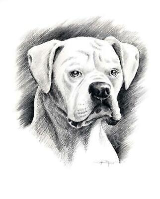 WHITE BOXER DJR DOG PAINTING PRINT POSTER WALL ART ROOM HOME DECOR VINTAGE RETRO