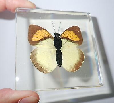 10 Beetle Collection Set Golden Frame Painted Clear Block Education Specimen
