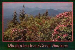 Great Smoky Mountains National Park, Tennessee, Blue Ridge, Appalachian Postcard