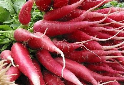 100 CHINA ROSE RADISH Chinese Winter Vegetable Seeds