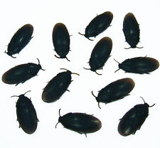 ONE DOZEN  REAL LOOKING ROACHES PLACE THESE IN KITCHEN AND BATH FOR BEST EFFECT
