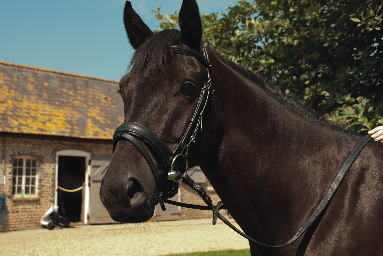 HERITAGE ENGLISH LEATHER 'COMFORT'  BRIDLE FLASH NOSEBAND
