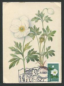 Capable La Pologne Mk 1963 Flore Fleurs Flowers Maximum Carte Carte Maximum Card Mc Cm C9338-afficher Le Titre D'origine
