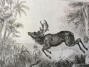 Print-Gravee-per-Monnin-after-Rienzi-Island-Kalemantan-Oceania
