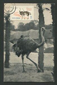 ROMANIA-MK-1964-FAUNA-STRAUss-OSTRICH-VOGEL-MAXIMUMKARTE-MAXIMUM-CARD-MC-CM-d2577