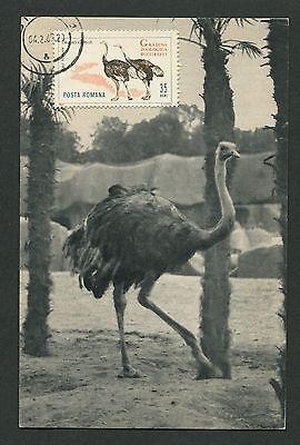 Ernst Romania Mk 1964 Fauna Strauß Ostrich VÖgel Maximumkarte Maximum Card Mc Cm D2577 Motive Tiere