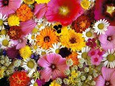 Tanti semi misti di Fiori con fioritura estiva Piante annuali anche rampicanti