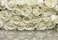 Wall Mural WHITE ROSES photo Wallpaper Large size wall art ROSE FLOWERS