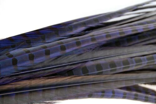 """DYED ENGLISH RINGNECK Pheasant Feathers 20-26/"""" MANY COLORS Costume//Hats//Craft"""