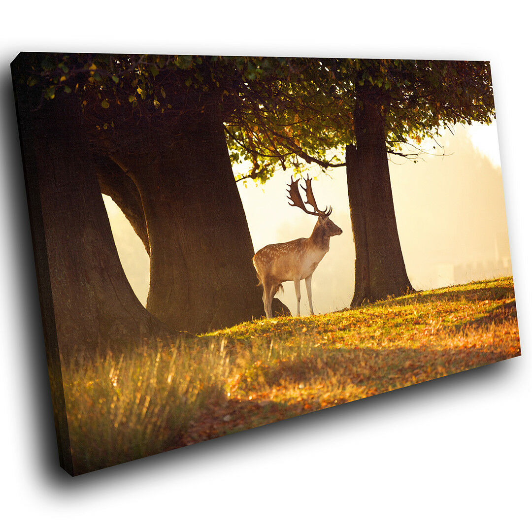 A541 Golden Sunrise Forest Stag Funky Animal Canvas Wall Art Large Picture Print