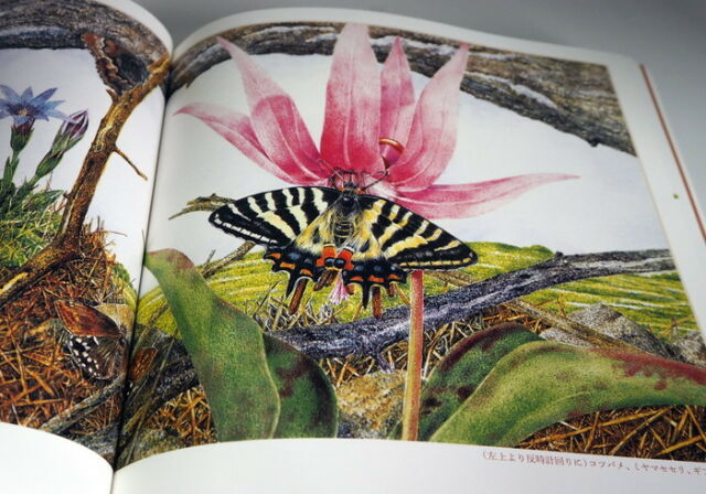 Kumada Chikabo's  Picture book art book from Japan Insect Animal Bird #0896