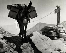 1934/63 Vintage 8x10 PHOTOGRAPHER BURRO Photography Equipment Donkey ANSEL ADAMS