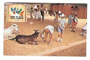 Vintage-Postcard-Six-Flags-Over-Texas-Animal-Kingdom-U-S-Section-1960s