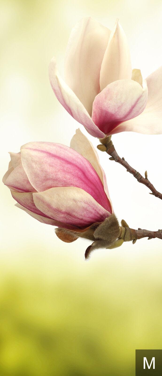 Papier peint toile toile peint MAGNOLIA papiers peints   fleurs fdb106 f18540
