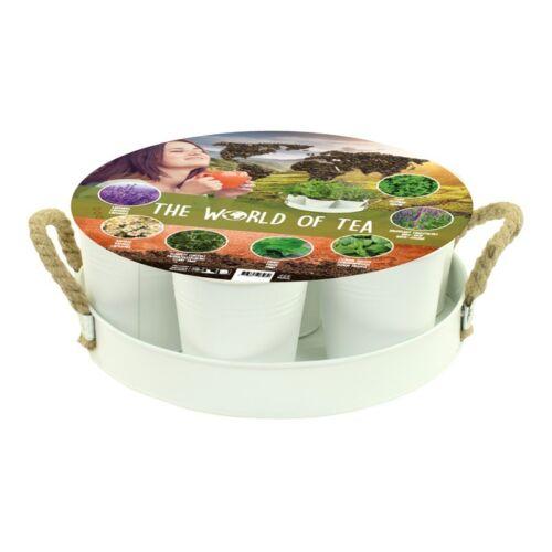 7 Teepflanzensamen Erde Töpfen Tablett Tragegriff   UVP 19,95 Neu