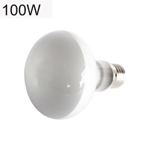 UVB UVA halogen bulb temperature controller reptile lizard turtle drying lamp