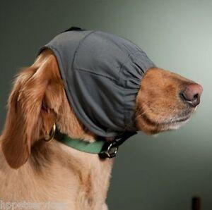 how to stop dog barking at thunder