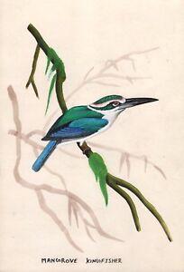 Indiano-Miniatura-Pittura-Mano-Mangrovia-Kingfisher-Uccello-Wild-Life-Natura-Art